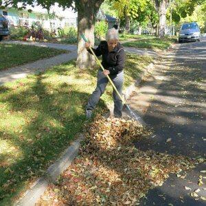 Raking leaves from the street