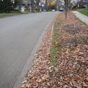 Leaves on Terrace - From Phil Gaebler