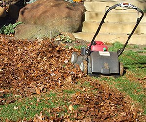 Mulched leaves with lawnmower