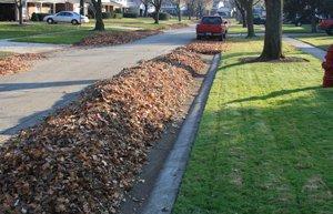 Leaf pile along street gutter line