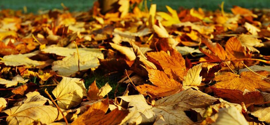 Fall leaves - Pexels photo