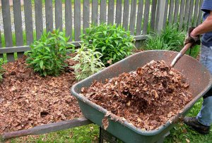 Wheel barrel with leaf litter and mulch