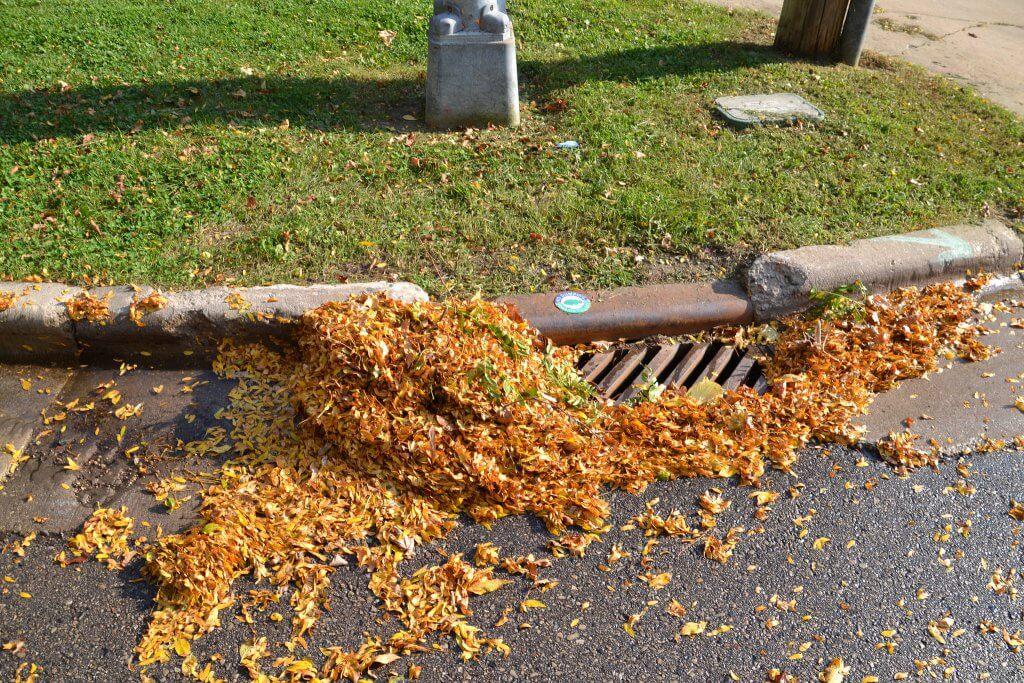Leaf Management