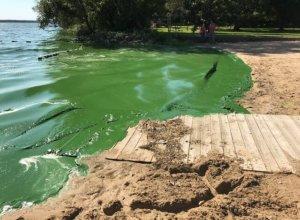 Lake Kegonsa Cyanobacteria, September 2018