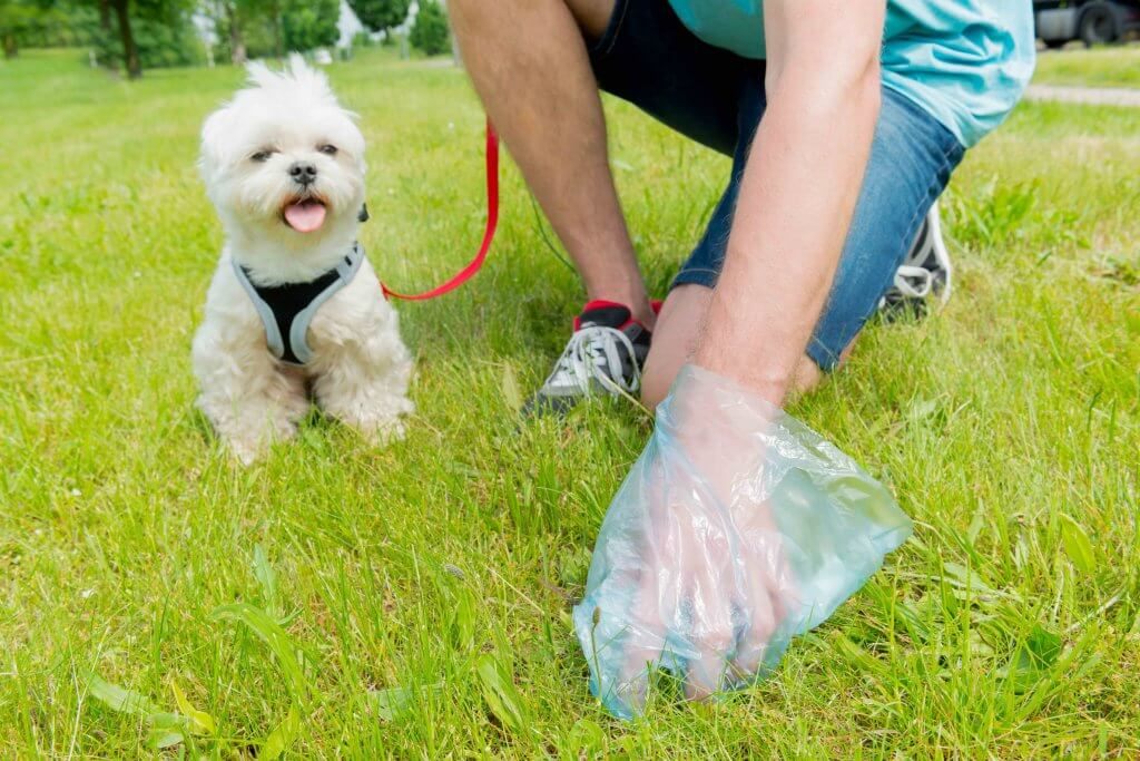Pick up pet waste to help our lakes