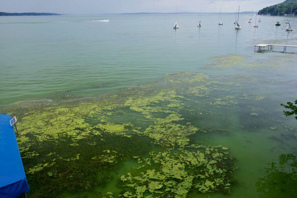 Cyanobacteria bloom 2019 - Lake Mendota - Arlene Koziol