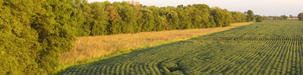 Buffer edge on a farm - using precision ag and conservation to utilize unproductive field areas.