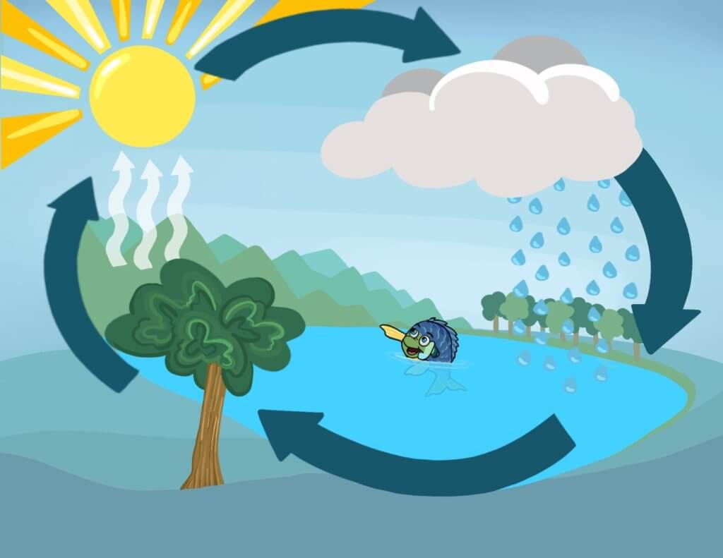 The Water Cycle - Billie the Bluegill helps with educating kids about the lakes