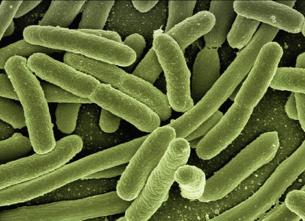 ecoli-bacteria-creditGerdAltmann-Pixabay